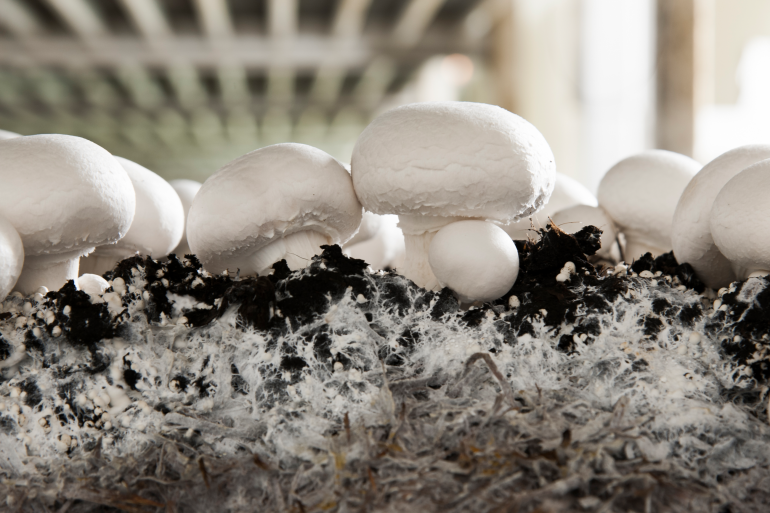 Look-Think-Act: use the signals given by mushrooms and compost